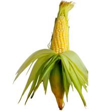 Кукуруза / Кукурузные рыльца
