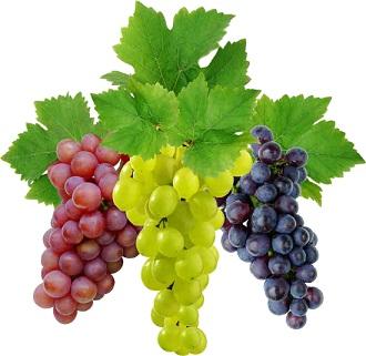 Виноград (Vitis Vinifera)