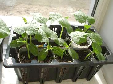 Подкормка для растений сухая «Ургаса»